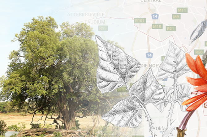 The history and promises of thetreeapp south africa